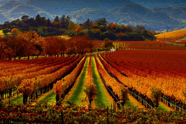 Napa Valley photo by  Malcolm Carlaw