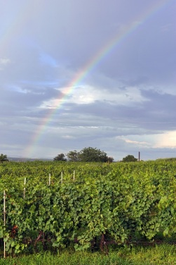 Weather effect on Bordeaux Wine 2015